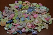 700+ PCS DRILLED DYED COLOR SEA SHELL BEADS CHARMS 1 POUND #T-1937