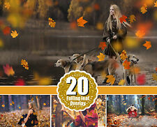 20 Autumn falling leaves Photo Overlays, Photography, png file