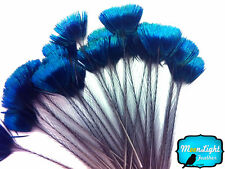 10 Pieces - BLUE Iridescent Peacock Crown / Corona Loose Feathers