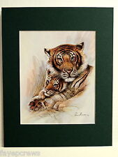 TIGER AND CUB PICTURE BENGAL TIGER MATTED PRINT 11X14