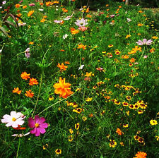 Drought Tolerant Wildflowers Mix Seed 200 Seeds Colorful Flower Garden Seed K007