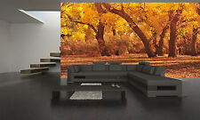 Autumn Forest II  Wall Mural Photo Wallpaper GIANT DECOR Paper Poster Free Paste