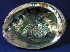 HUGE Abalone Shell, Perfect to burn Sage Smudge, Resin, Incense FREE SHIPPING