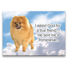 POMERANIAN True Friend From God FRIDGE MAGNET New DOG