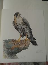 RAY HARM PEREGRINE FALCON(ON ROCK)-BUY 3 PRINTS 1 AT LEAST $65 THEN GET ONE FREE