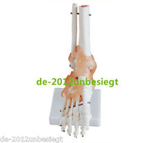 HUMAN SKELETON LIGAMENT FOOT & ANKLE JOINT ANATOMICAL ANATOMY MEDICAL MODEL