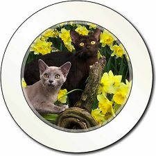 Burmese Cats Amoungst Daffodils Car/Van Permit Holder/Tax Disc Gift, AC-33DAT