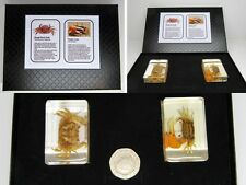 Real crab nature set in crystal clear resin with information card on gift box