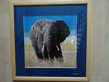 "17.25"" squ. Limited Edition Framed Elephant by Wildlife Photographer Pete Cooper"
