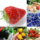 100PCS Strawberry Seeds Nutritious Delicious Fruit Seed For Garden Home