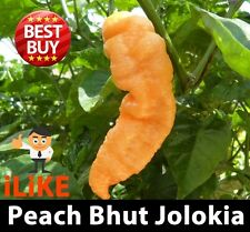 Bhut Jolokia/Ghost Pepper Chilli Seeds Peach x 20 One Of The Worlds Hottest !