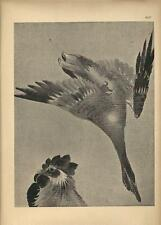 Stampa antica GIAPPONE JAPAN STYLE anatra gallo Gillot 1885 Antique print