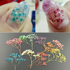 10g/set 3D Nail Art Decoration Dried Babysbreath Preserved Flower Manicure Tips