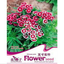 FD1700 Chinese Pink Dianthus Seed Carnation Flower Seeds Rare ~1 Pack 50 Seeds~
