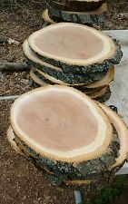 """6 Pc 10"""" to12""""Oak Log oval Slices Wood Disk Rustic Wedding Centerpiece Coaster"""