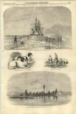 1855 Captain Collinson Arctic Expedition Japanese Lapdogs Skin Boats