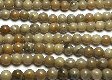 "15"" Strand ""Petoskey"" FOSSIL CORAL 3.5mm Round Beads"