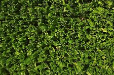 NEW 3.7m x 3m - 19mm Realistic Look Synthetic Grass Roll - Australian Made Turf