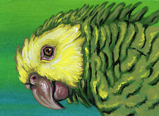 ACEO ATC Yellow Head Amazon Bird Parrot Art Original Painting Three -Carla Smale