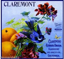 Claremont Citrus Union Blue Bird Orange Citrus Fruit Crate Label Art Print