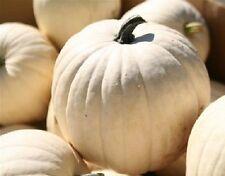 50 Lumina Pumpkin Seeds White Pumpkin BULK SEEDS