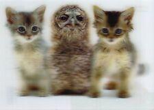 3 -D - Ansichtskarte: Baby - Eule (Kauz) und Kätzchen - baby qwl and kittens