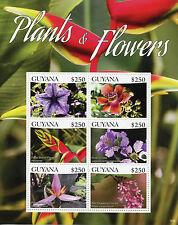 Guyana 2015 Gomma integra, non linguellato piante & fiori 6v m/s i BRAVO BLU vena CANNONBALL ALBERO FRANCOBOLLI