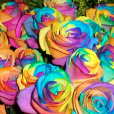 Rainbow Rose Bush Flower 100pcs Seeds Home Garden Plants Valentine Beauty Easy