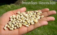 100 CANARY BEANS,Peruvian beans (Bush/Dry) Aka Mayocoba Beans, Peruano Beans