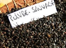 Poivre Sauvage de Madagascar épices fine rare 50 gr saveur Gastronomie cuisine