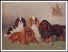 King Charles English Toy Spaniel Group Four Dogs Lovely Dog Print Poster