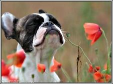 4 Pack Puppy Dog Boston Terrier Dogs Puppy puppies Greeting Notecards/ Envelopes