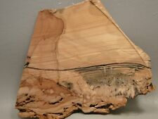 Willow Creek Picture Jasper Rough Rock Stone Slab Cabbing Cutting Idaho #7