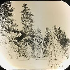 Antique Magic Lantern Glass Photo Trees Near Giantess FJ Haynes Fargo