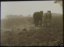 Glass Magic Lantern Slide FARMERS BURNING TWITCH NO2 C1900 PHOTO KENT ? HORSES