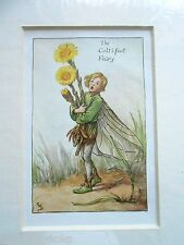 CICELY MARY BARKER - The Colt's Foot Fairy Flower Fairies Vintage Mounted Print