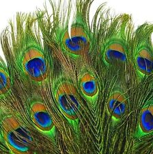 FD3892 Real Natural Peacock Tail Eyes Feathers Home Decor 8-12 Inches ~10PCs~
