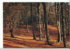 Surrey Postcard - Mickleham Woods - Dorking    A8220