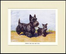 SCOTTISH TERRIER AND PUP CHARMING DOG PRINT MOUNTED READY TO FRAME