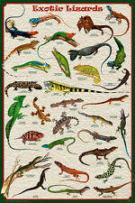EXOTIC LIZARDS (LAMINATED) POSTER (61x91cm) Tetrapods Gecko EDUCATIONAL CHART