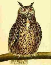 A4 Photo Martinet F 1765 Great Owl Print Poster