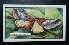 Figure of Eight Moth   Vintage Colour Card   VGC
