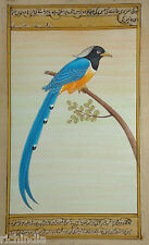 Bird Watching Painting Forest Water Color Wild Life Blue Magpie Us_AR110