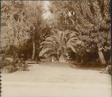 France, Jardins de Menton  Vintage citrate print. Côte d'Azur Tirage citr
