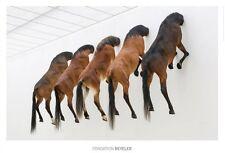 Maurizio Cattelan Poster Kunstdruck Bild Fünf Pferde 70x100 cm Offset Portofrei