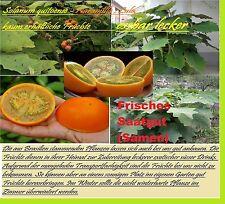 25x Orange Naranjilla Lulo selten Samen Saatgut Pflanze Rarität essbar Obst #126