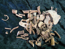 Marshmallow root herb Wicca/Pagan/Spell Supplies/Herbs/Incense witchcraft