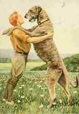 A4 Photo Fuertes Louis Agassiz 1919 Irish Wolfhound Print Poster