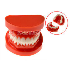 1 Pc Dental Teach Study Adult Standard Typodont Demonstration Model Teeth
