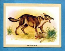 NATURAMA - Lampo 1968 - Figurina-Sticker n. 245 - COYOTE -Rec